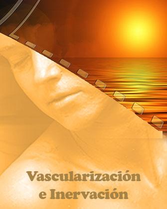 Vascularización y su inervación